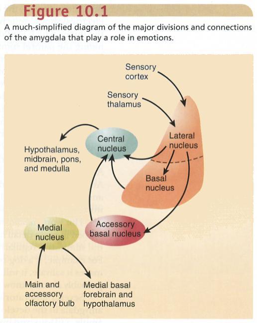 Basal metabolic rate | definition of basal metabolic rate ...